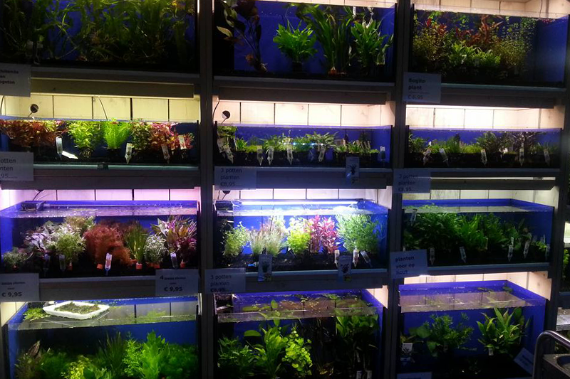 De mooiste aquariumplanten