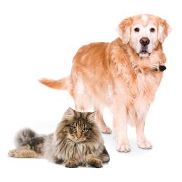 Artrose bij hond en kat