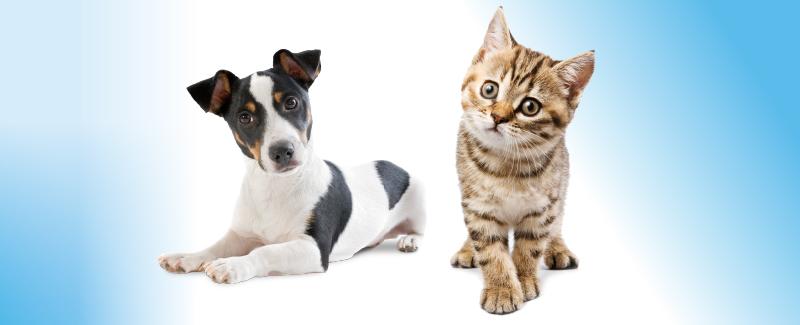 Vakantie met uw huisdier